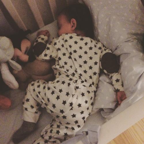 gordo dorme.JPG