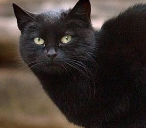 blackie[1].png