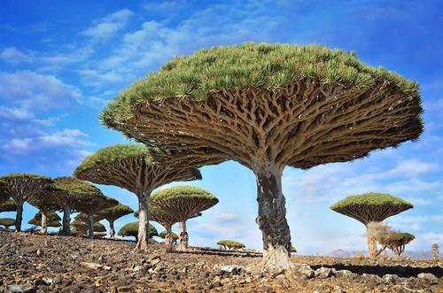 76855-880-1447278243amazing-trees-14.jpg