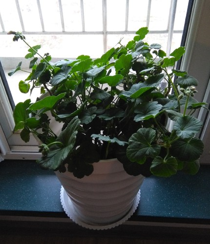 Planta4