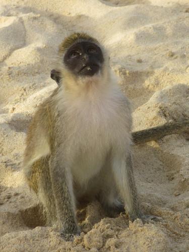 macaco#3.JPG