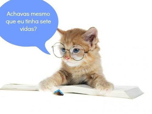 pequeno-gato-de-material-gato-imagem_38-4248.jpg