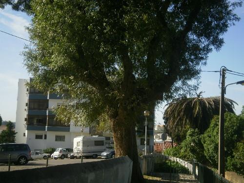 PA182701.JPG