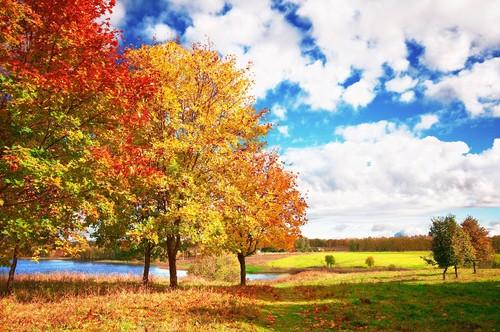 autumn-autumn-bright-trees-blue-sky-clouds.jpg