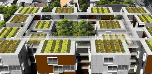 MM-hortas nos telhados.jpg