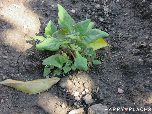Agricultura2.2.jpg