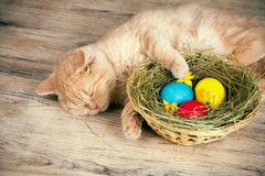 pouco-gato-de-creme-que-dorme-perto-da-cesta-com-o