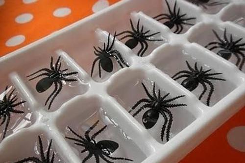 spider-ice.jpg