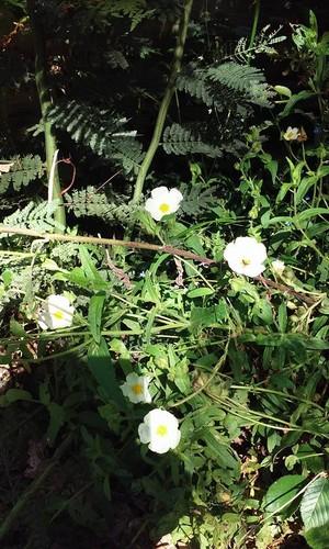 flores_ecopista_2.jpg