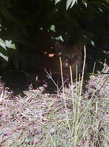 gatos-em-quintal-materno_VC-Agosto 2013_3.jpg