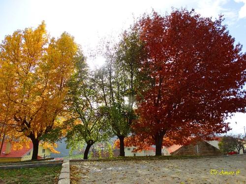 Fotos de Outono !!! 017.jpg