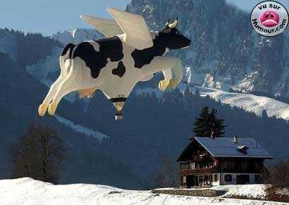 vaca_voadora.jpg