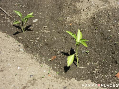 Agricultura2.4.jpg