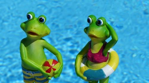 frog-830869.jpg