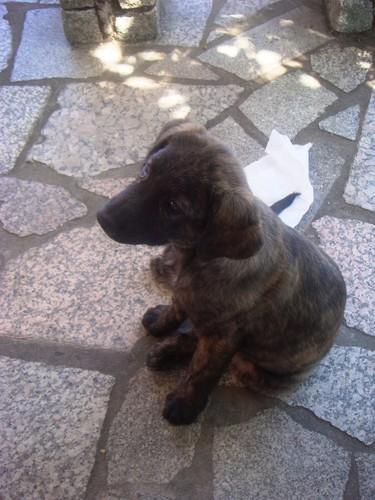 12 a2 - Cão de Castro.jpg
