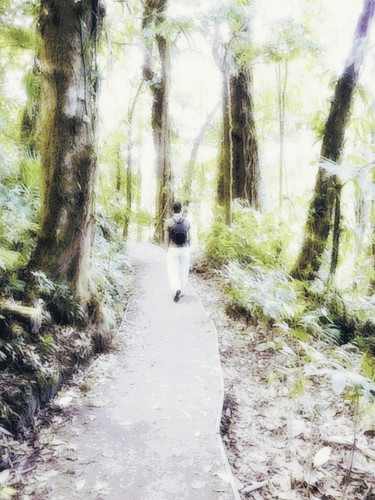 Bosque Nebuloso de Monteverde (564) cópia 4.jpg