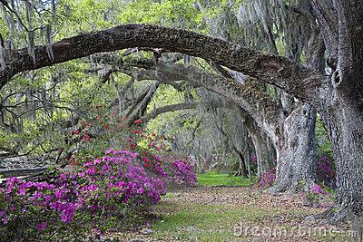 árvores velhas.png
