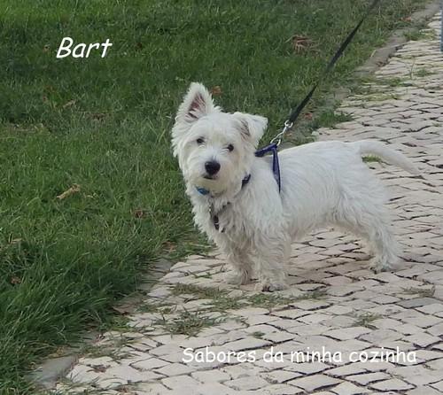 IMGP3855-Bart-Blog 2.JPG