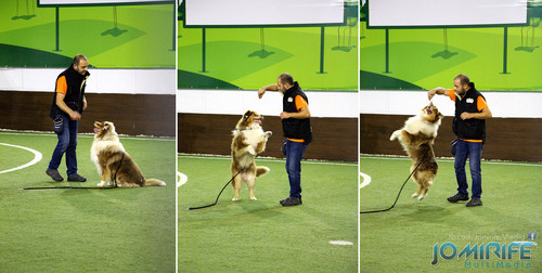 Treino de cães na PET FUN Coimbra [en] Training dogs in PET FUN Coimbra Portugal