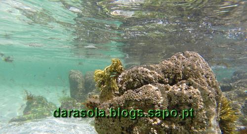Ilha_Ons_28.JPG