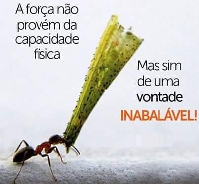 FB_IMG_1457266645210.jpg