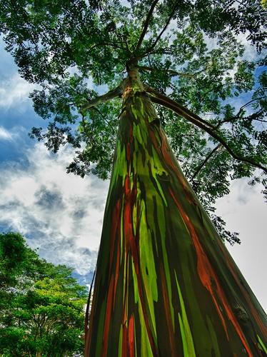 77055-880-1447278243amazing-trees-19-1.jpg