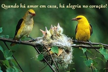 aves-no-ninho.jpg