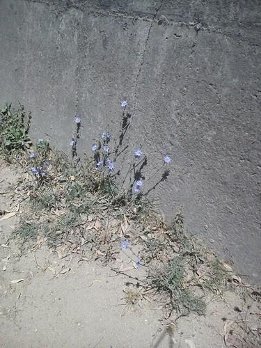 HSF-Primavera em flor.jpg