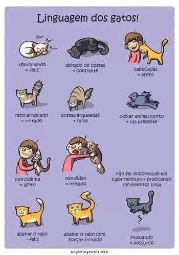 linguagem dos gatos.jpg