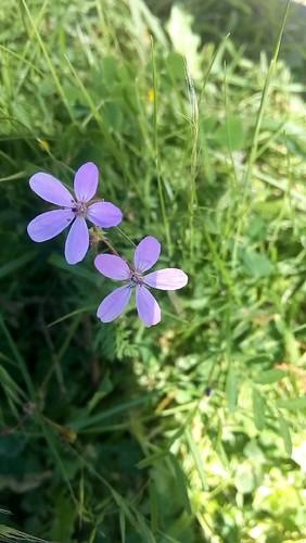56_A3C_Violeta.jpg