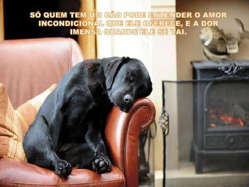 cão.jpg