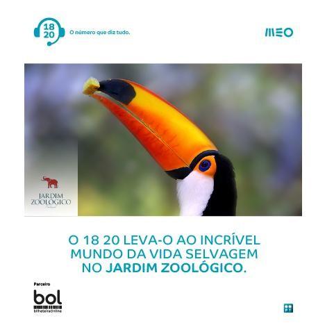 Passatempo 18 20 Zoo_Lisboa