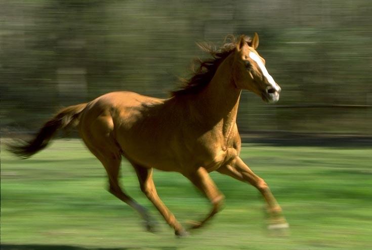 horserunning3.jpg