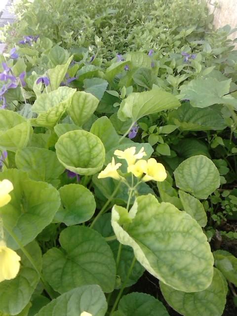 o meu jardim.jpg