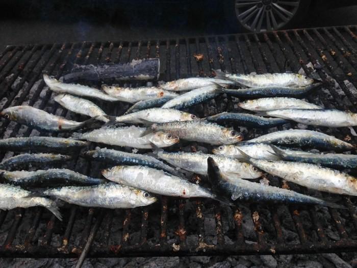 sardinhas.jpg