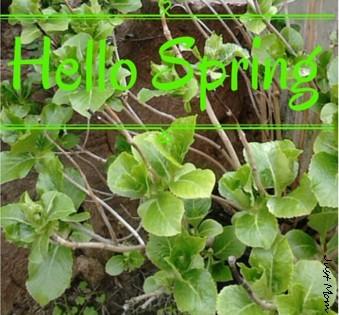 hello spring jm.jpg