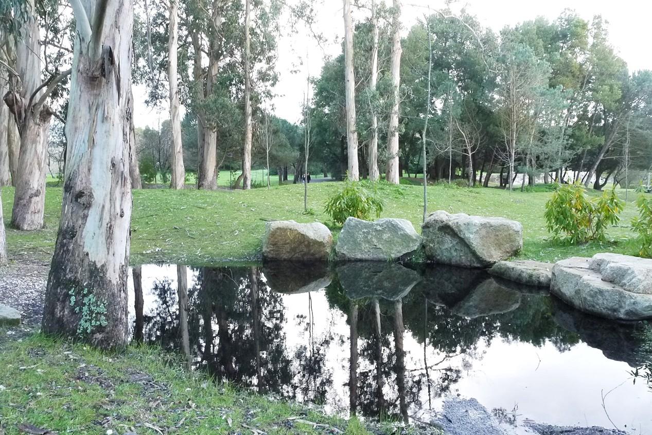 Parque da cidade Porto2.JPG