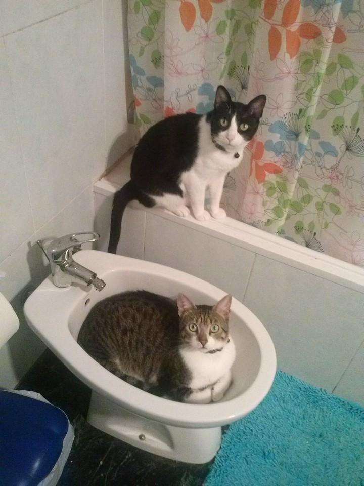 Leo&Oreo.jpg