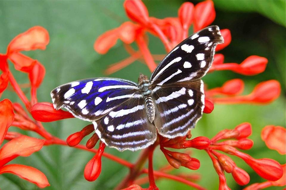 butterfly-180973_960_720.jpg