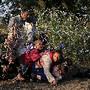 Migrantes sírios a entrar pelo arame, Hungria