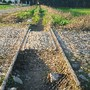 Ecopista_PVZ_19