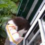 a_curiosidade ia matando o gato.JPG