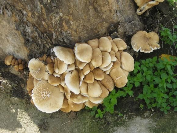 cogumelos 2.jpg