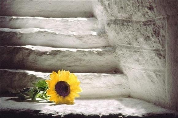 a flor e a escada.jpg