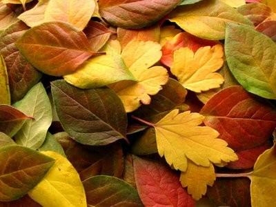 Folhas de Outono.jpg