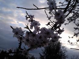 Foto1931. ramos floridos em contraluz. Foto de DAPL jpg