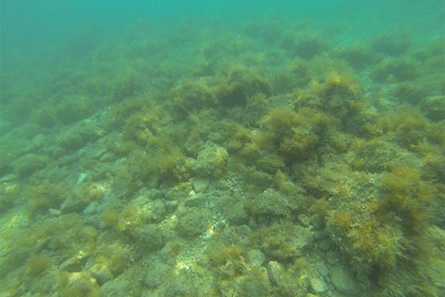 drasnice_snorkeling