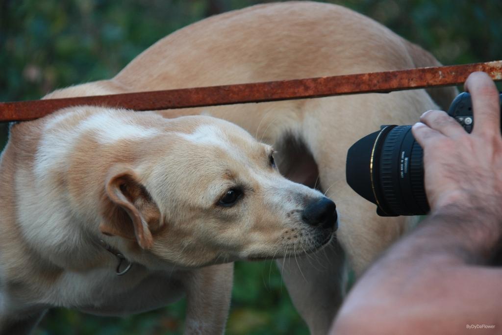 curiosidade canina.JPG