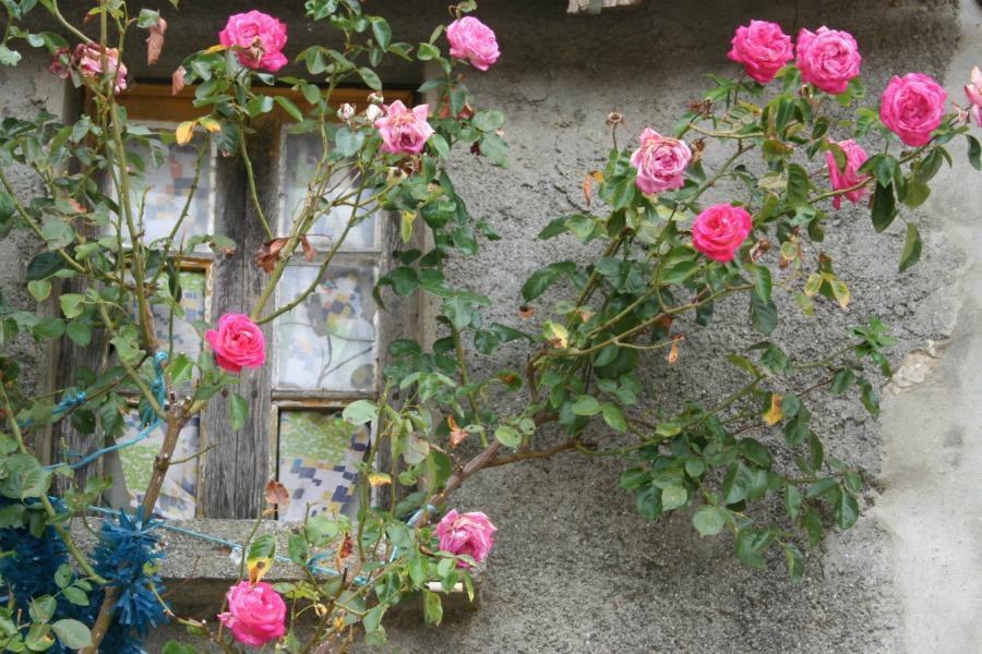 Rosas by HContadas