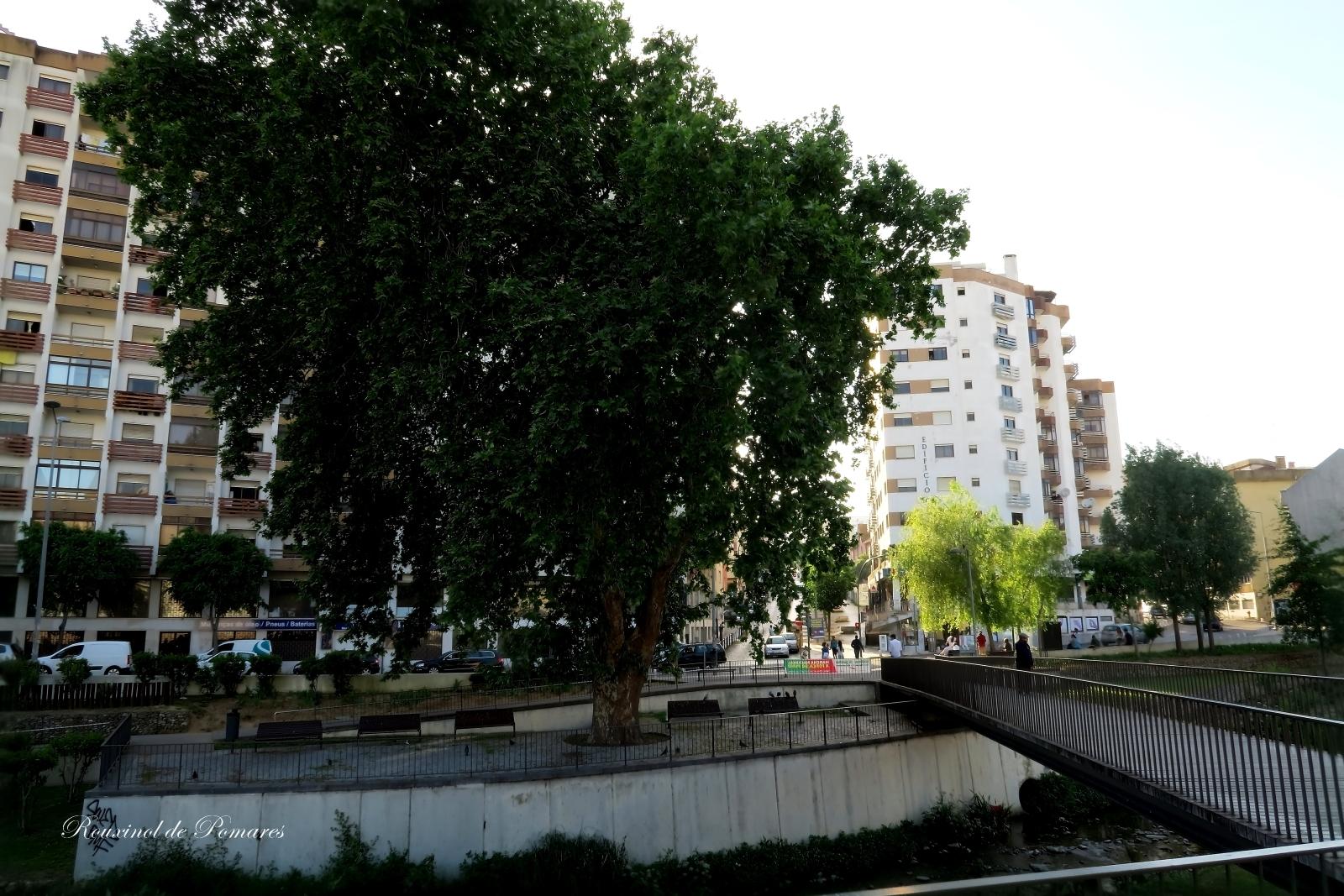 A minha cidade (I) (12)